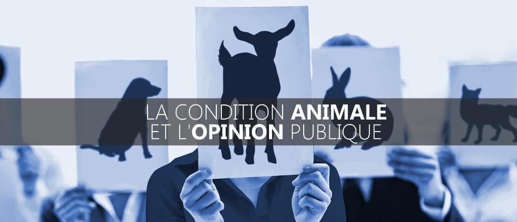 Bannière : opinion publique