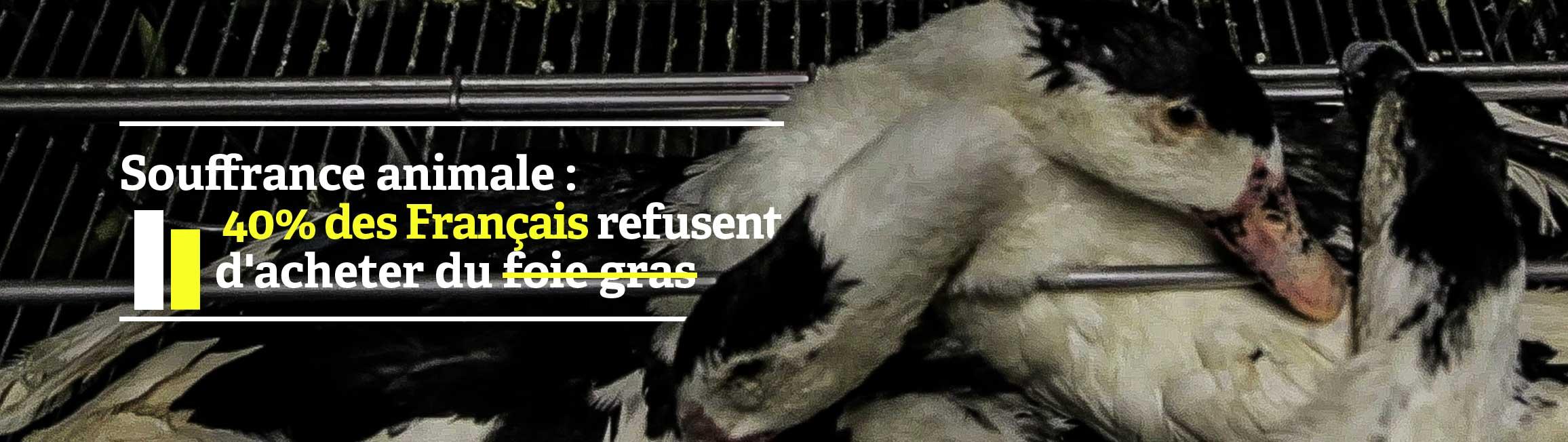 40% des Français refusent d'acheter du foie gras